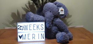 Pregnancy announcement elephant and sign 23 weeks
